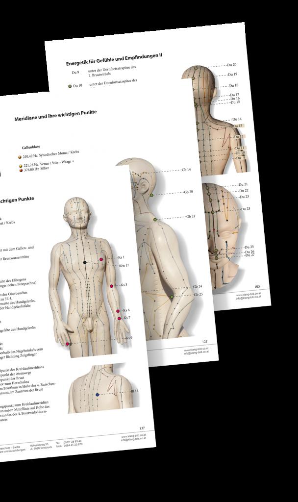 Beste Anatomie Eines Stiers Galerie - Anatomie Ideen - finotti.info